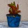 Blue-marble-concrete-planter-with-succulents-red