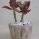 Natural-succulent-planters-marble-resin-concrete-with-succulent