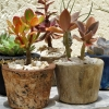 Rust-neutral-planter-selection